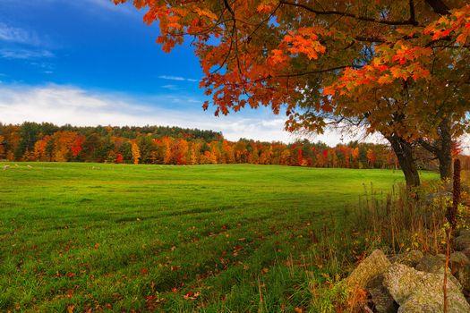Photo free autumn, field, pasture