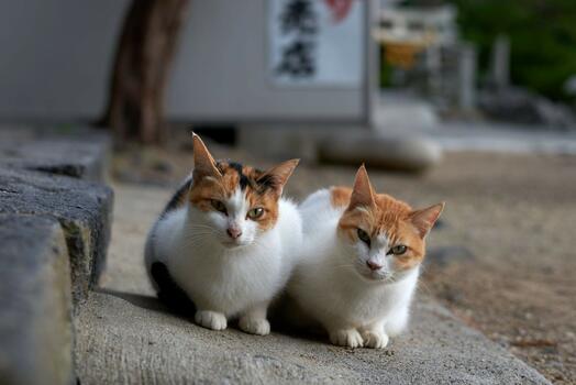 Фото бесплатно котенок, кошка как млекопитающее, усы
