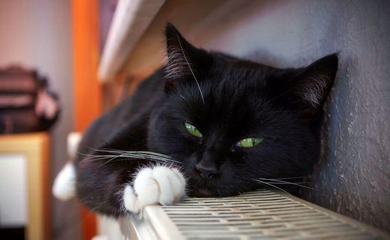 Photo free cat, lying, green eyes