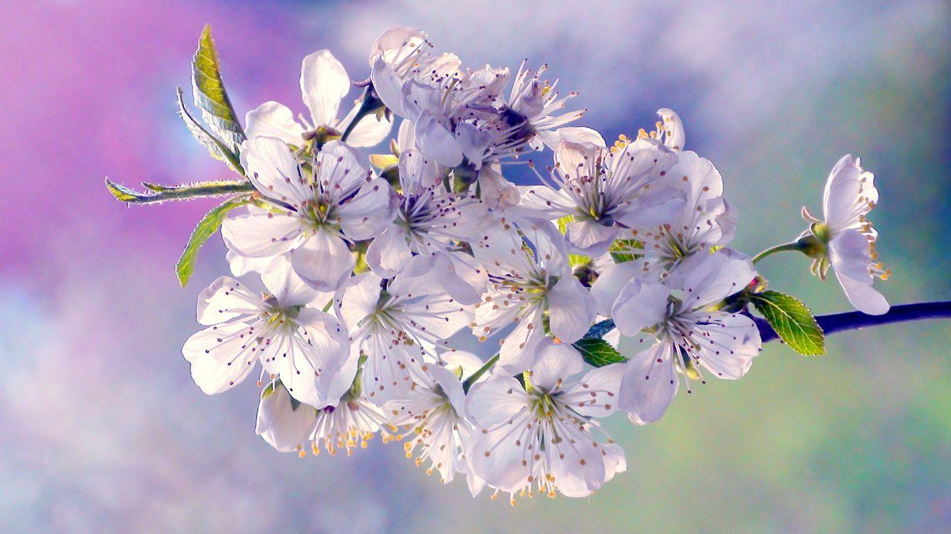 Фото бесплатно цветущая ветка, цветы, цветение - на рабочий стол