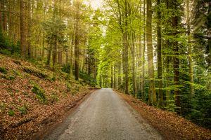 Красивые картинки дорога, лес, деревья
