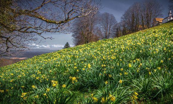 Фото бесплатно цветы, холм, сезоны