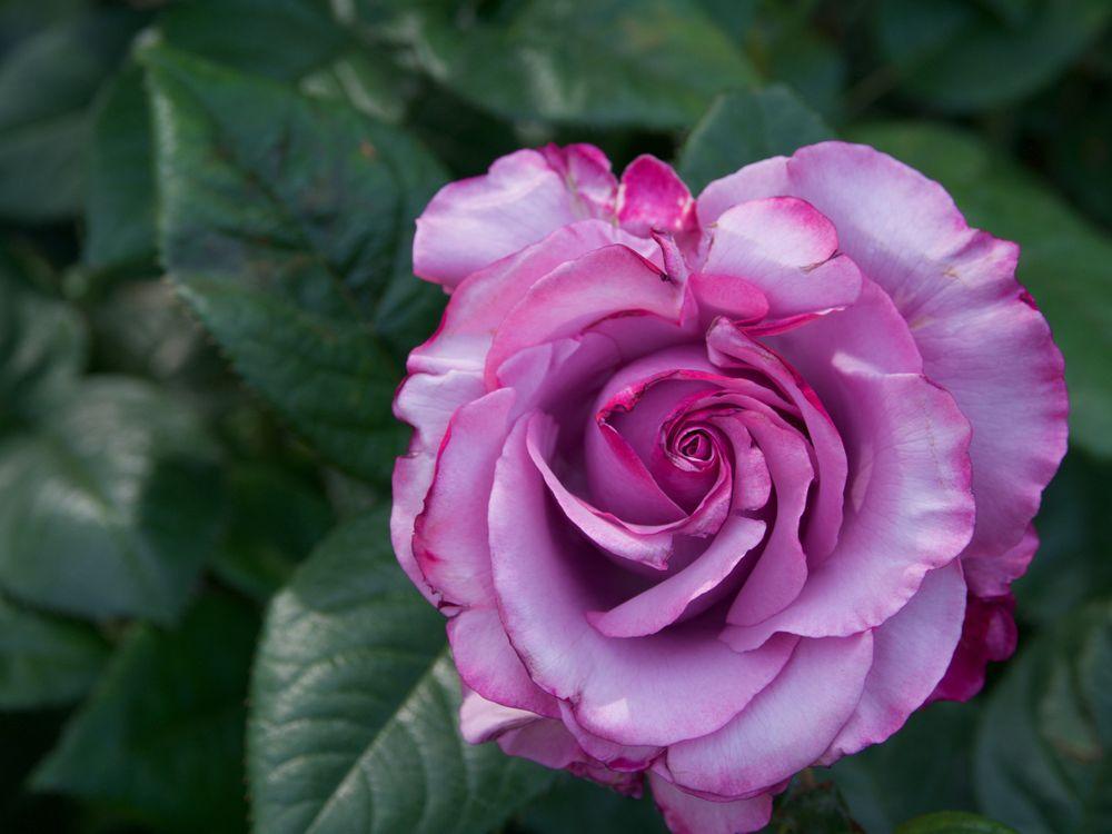 Free photo flora, macro, flower composition - to desktop