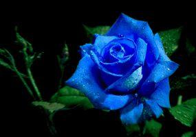 Бесплатные фото розы, цветок, роза, цветы, цветочный, цветочная композиция, флора