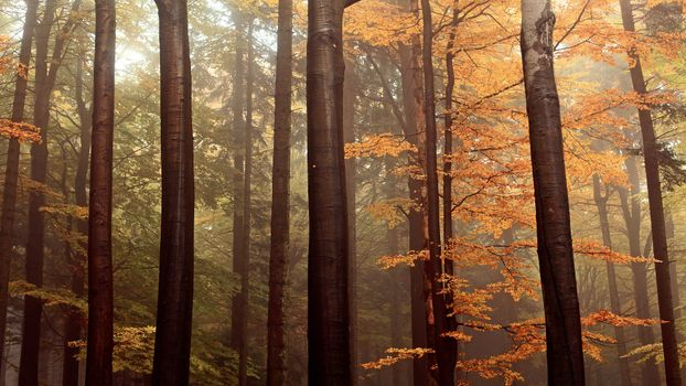Photo free long trunk, autumn, trees