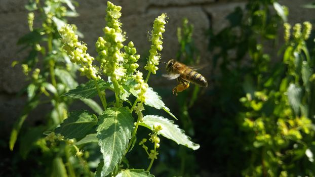 Photo free bee, pollination, leaves