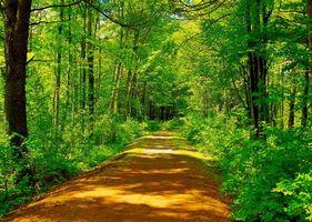 Бесплатные фото лес, деревья, дорога, пейзаж
