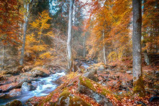 Заставки река, лес, поле