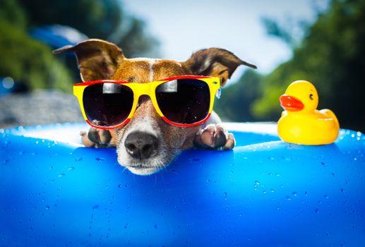 Фото бесплатно собака, животные, смешно