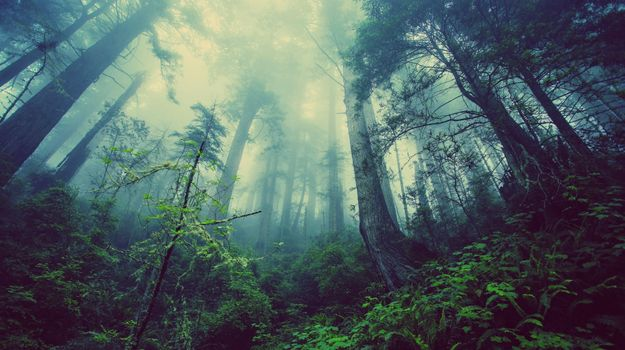 Photo free plants, fog, trees