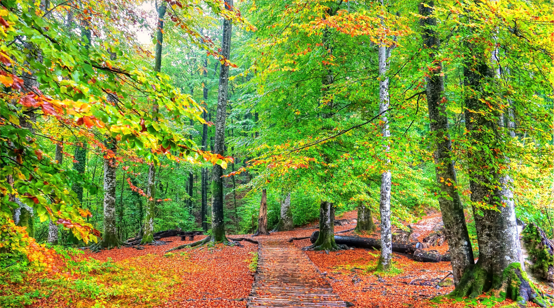 Обои Плитвицкие озера хорватский национальный парк, Плитвицкие Озера, Хорватия, деревья