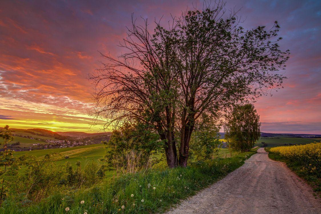 Фото бесплатно поле, дорога, деревья, закат, пейзаж - на рабочий стол