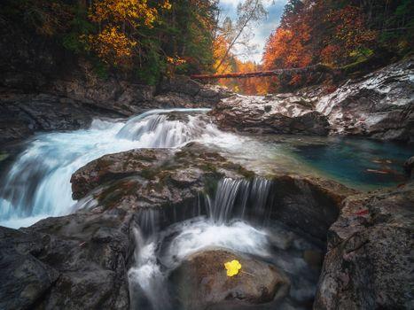 Фото бесплатно ручей, река, дерево