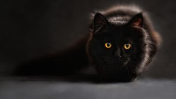Фото бесплатно кошки, черный, усы