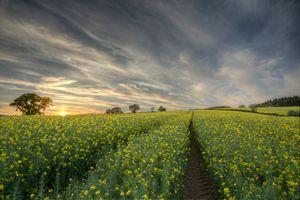 Бесплатные фото закат,поле,цветы,небо,дорога,пейзаж,природа