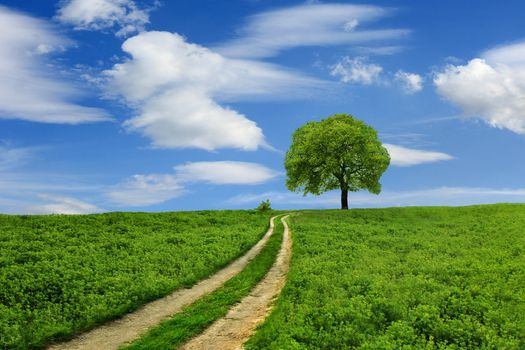 Photo free single tree, clouds, field