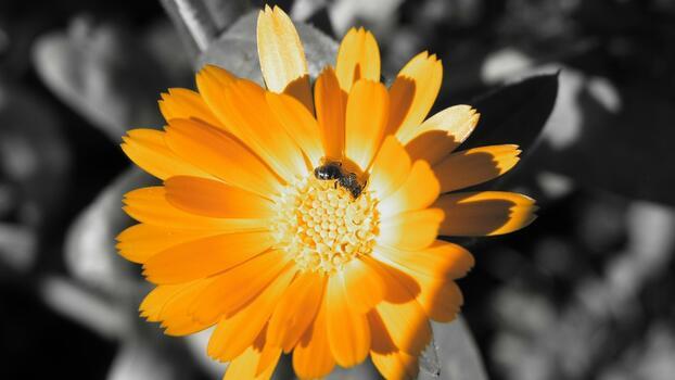 Фото бесплатно фотографии, макросъёмка, флора