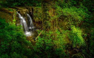 Фото бесплатно лес, водопад, растения