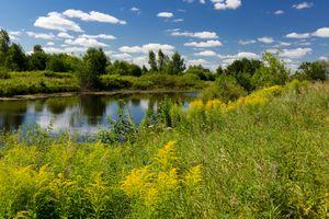 Летний пейзаж с речкой · бесплатное фото