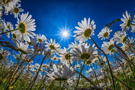 Фото бесплатно Marco, цветы, флора