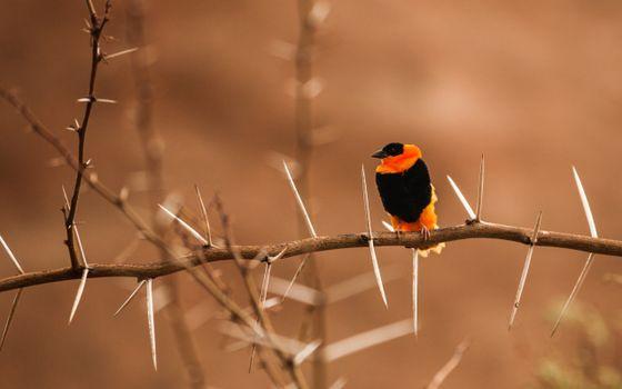 Photo free birds, twig, photos