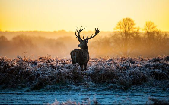 Фото бесплатно олень, вид сзади, закат