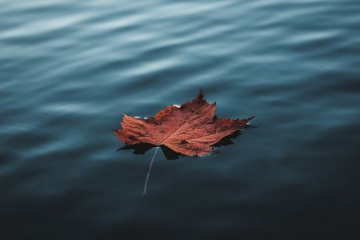 Photo free leaf, water, nature