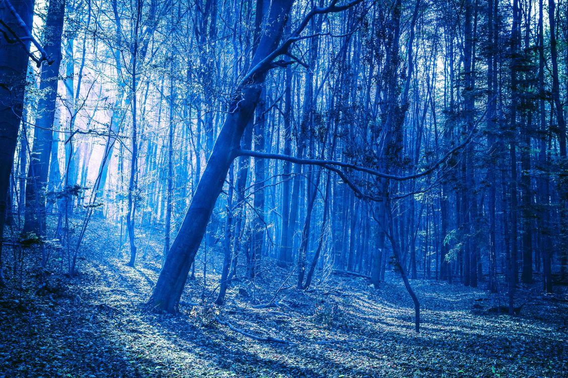 Фото бесплатно лес, деревья, лучи солнца - на рабочий стол