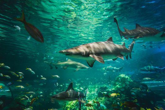 Фото онлайн бесплатно акулы, морские обитатели