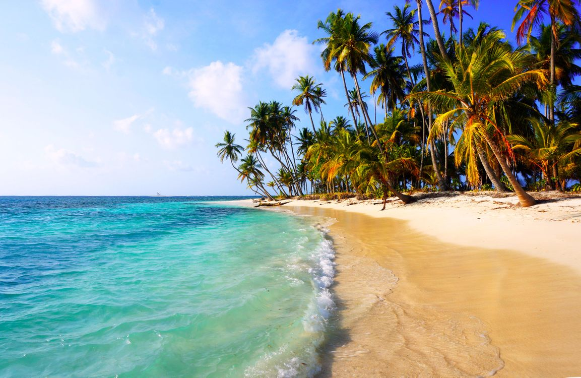 Заставка пляж, тропики на телефон
