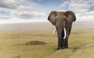 Фото бесплатно животные, дикая природа, слон