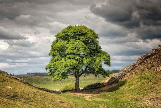 Photo free field, hilly terrain, single tree