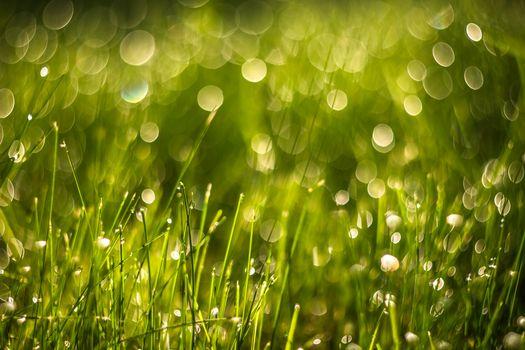Фото бесплатно солнечный свет, вода, трава