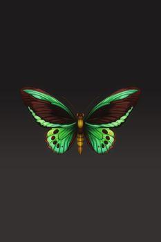 Фото бесплатно дизайн бабочки, цифровое искусство, крылья