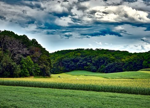 Photo free corn field, clouds, forest