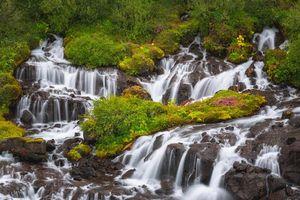 Бесплатные фото Исландия,лето,Хрёйнфоссар,полевые цветы,река,Лавовое поле,зеленый