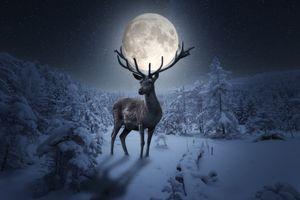 Фото бесплатно лунный свет, деревья, свечение