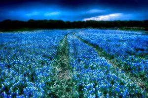 Бесплатные фото поле,цветы,люпин,дорога,природа,пейзаж