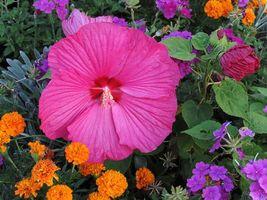 Фото бесплатно сад, клумба, цветы