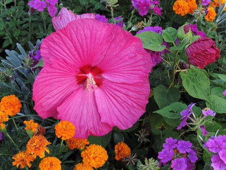 Photo free garden, flower bed, flowers
