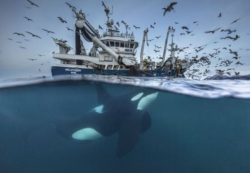 Фото бесплатно кит, подводный, рыбная ловля