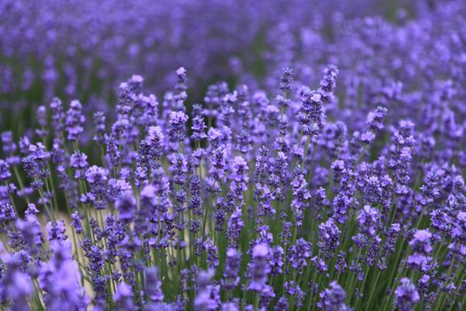 Фото бесплатно растение, поле, луг