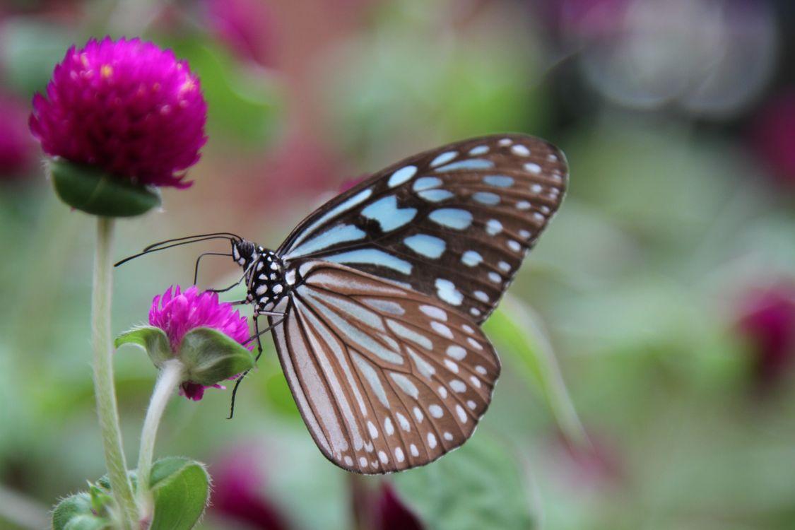 Фото бабочка пурпурные цветы близко - бесплатные картинки на Fonwall