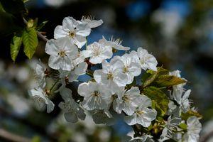 Photo free flowering branch, flower, flowers