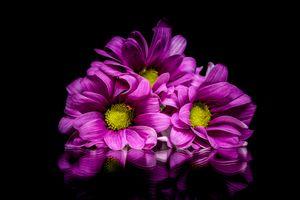 Бесплатные фото георгин,цветок,цветы,флора,цветочная композизия,чёрный фон