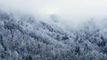 Фото бесплатно туман, замораживание, зима