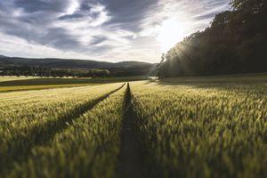 Фото бесплатно растение, солнечный свет, пейзаж
