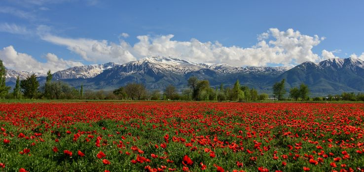 Фото бесплатно красота, Эрзинджан, пейзаж