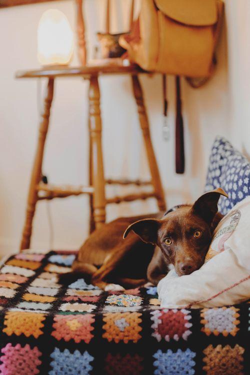 Собака и подушка · бесплатное фото