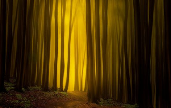 Photo free forest, lights, trees